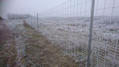 Vadhálós télen